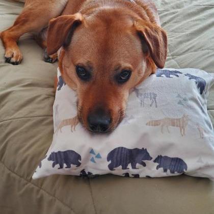 Snugglehead Dog Pillow Cover for do..